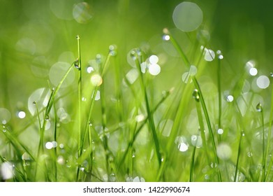 Green nature. Beautiful close up nature. Green grass with dew drops. Colorful spring background with morning sun and natural green plants landscape, ecology, fresh wallpaper concept with copy space.