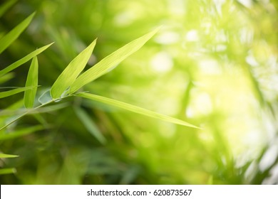 1000+ Nature Background Wallpaper Green Environment Stock Images