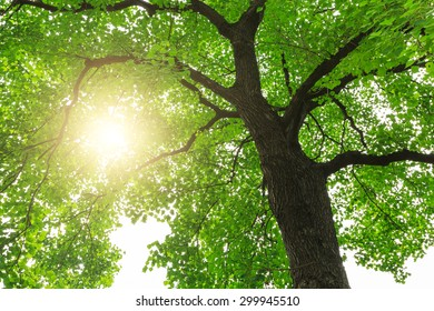 green nature  forest sunlight backgrounds