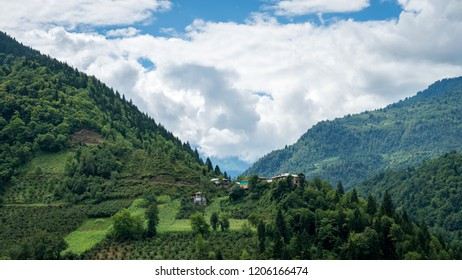 Green nature landscape of trees and forests in rural areas of Savsat, Artvin, Turkey