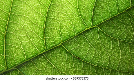 Green, nature, leaves, closeup, texture, background