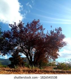 the green nature in Mediterrane