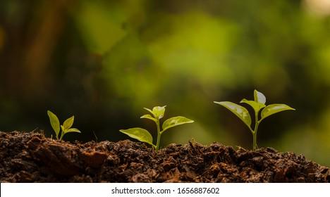 ัyoung green nature sprout in the soil is growing up. ecology and agriculture concept.