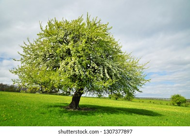 Green nature  tree at spring springtime background