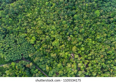 Green nature tropical deep forest aerial view