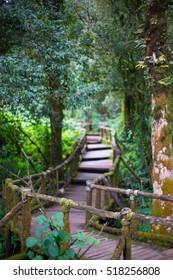 Green Nature Way