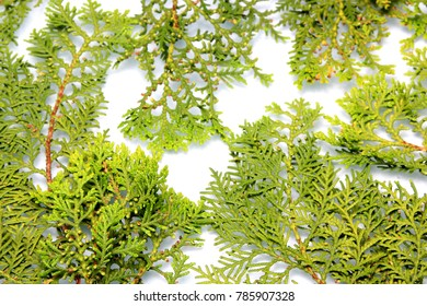 Green needles background close up. Christmas decoration background: pine and cypress cones with twigs on white wood table