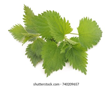 Green nettle isolated on a white background.