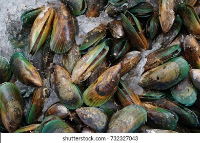 Green New Zealand fresh Mussel at market stall.