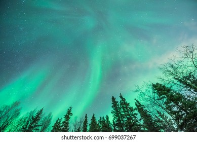 Green Northern Lights with trees in foreground, abstract landscape, big sky