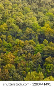 Green oak forest in Muniellos biosphere reserve, Asturias. Spanish landscape
