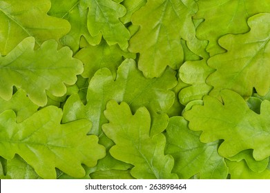 Green oak leaf background