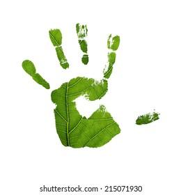 Green oak leaf. Closeup, isolated.