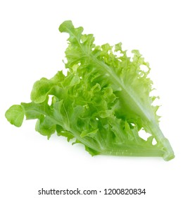 Green oak leaf lettuce isolated on white background.
