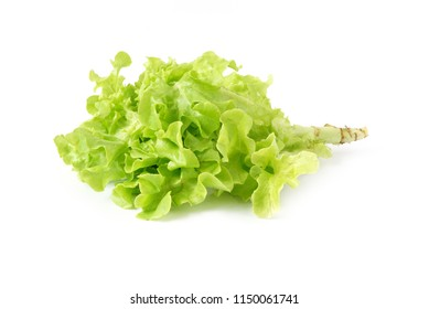 Green oak leaf vegetable  Healthy Food for salad isolated on white background