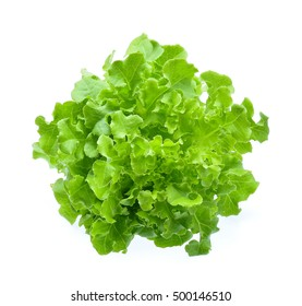 Green oak lettuce isolated on white background.