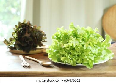 Green oak lettuce on table