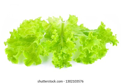 Green oak lettuce on white background.