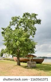 Green oak tree at the summer season. Closeup view