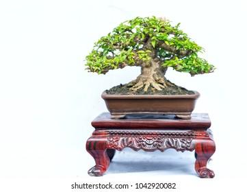 Artisans Bonsai Images Stock Photos Vectors Shutterstock