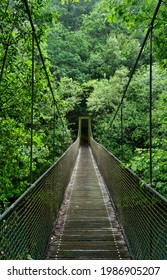 Green old-growth forest with suspension bridge over the river in Fragas do Eume natural park, Galicia, Spain