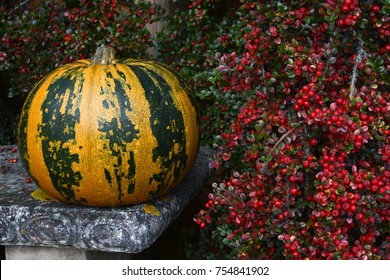Green and orange striped pumpkin on stone bench next to bright red cotoneaster berries in autumn