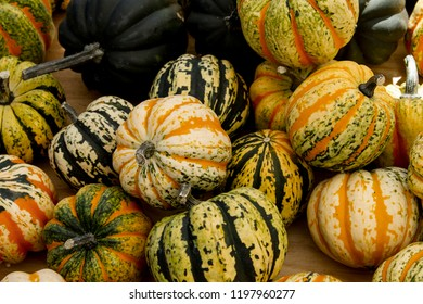 Green and Orange Striped Pumpkins at a Fall Festival