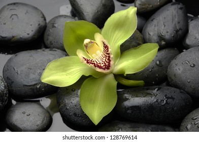 Green orchid on wet pebble