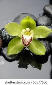 Green orchid(phalaenopsis) flower with reflection