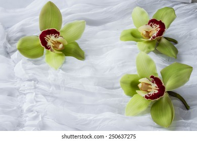Green orchids - isolated - white background