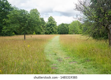 Green outdoor park path entering a wild meadow with long wild grass and trees in the distance