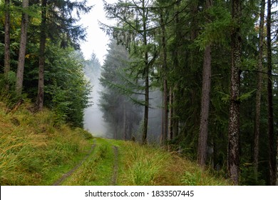 A green, overgrown path in the green, foggy Black Forest in Germany