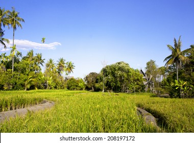 Green paddy field background pattern of natural vegetation.