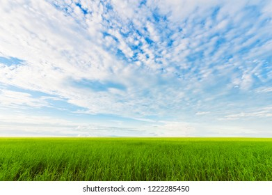 Green paddy fields with cloudy sky