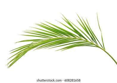 Green palm branch isolated on white