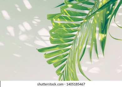 Green palm branch woth sunlight and shadow on white background, toned. Tropical, summer, vacation concept. Close-up, copy space