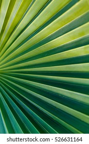 green palm leaf close up, macro surface, geometry in nature