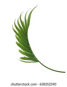 A green palm leaf isolated