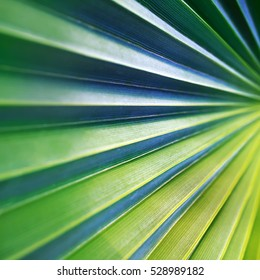 green palm leaf macro surface, geometry in nature