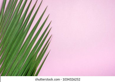 Green palm leaf on pastel pink table top.background.summer vacation backdrop.copy space for adding text or design