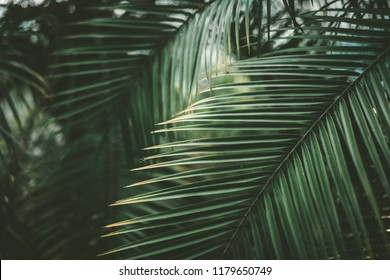 Green palm leaf pattern texture abstract background. Copy space for graphic design tropical summer concept. Vintage tone filter effect color style.