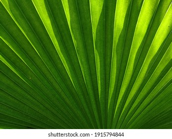 Green palm leaf with sunlight in the morning, copy space for your work.