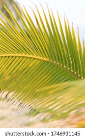 green palm leaf in the sunset