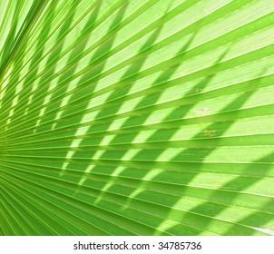 green palm leaf texture