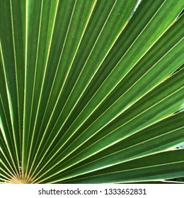 Green palm leaf texture abstract background