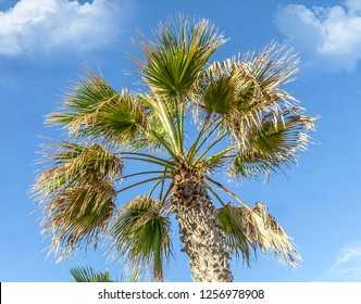 Green palm leaves against the sky