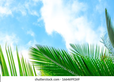 green palm leaves below against a blue sky with clouds with copy space
