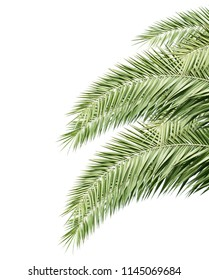 Green palm leaves isolated on white background