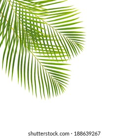 green  palm leaves isolated on white backgrouns