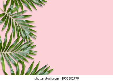 green palm leaves Monstera on pink background. Flat lay, top view